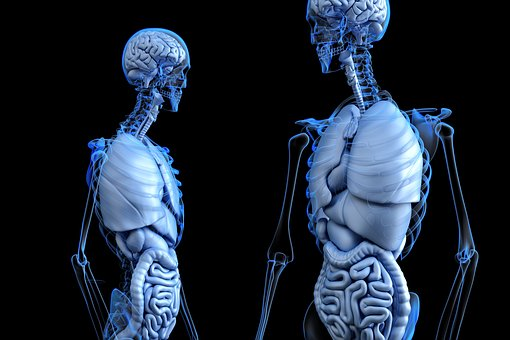 Comment chaque organe du corps réagit au sport?