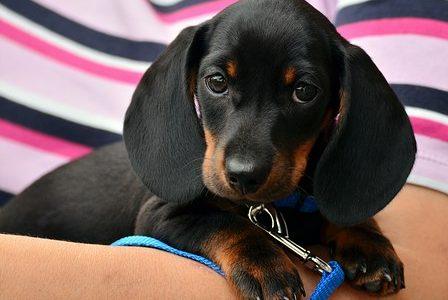 Sauvez rapidement vos animaux des cas urgents grâce aux vétérinaires à proximité