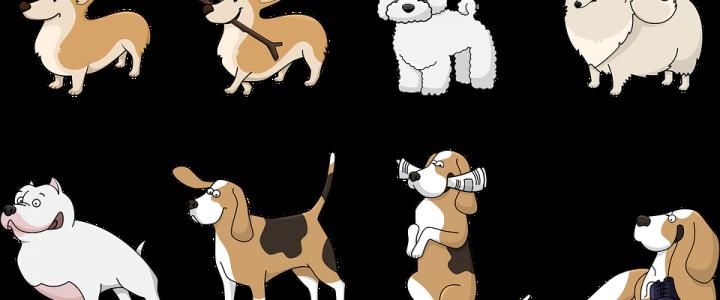 Prenez des conseils pour dresser votre chien