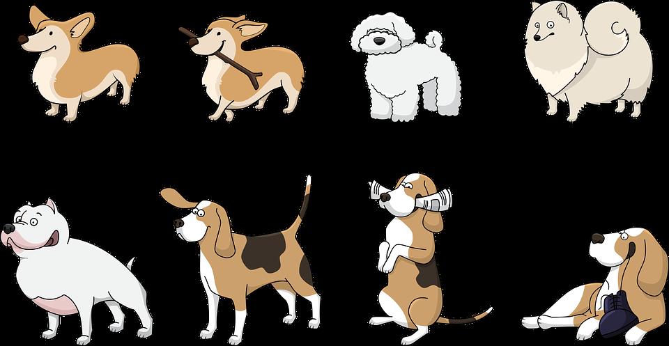 Dresser votre chien